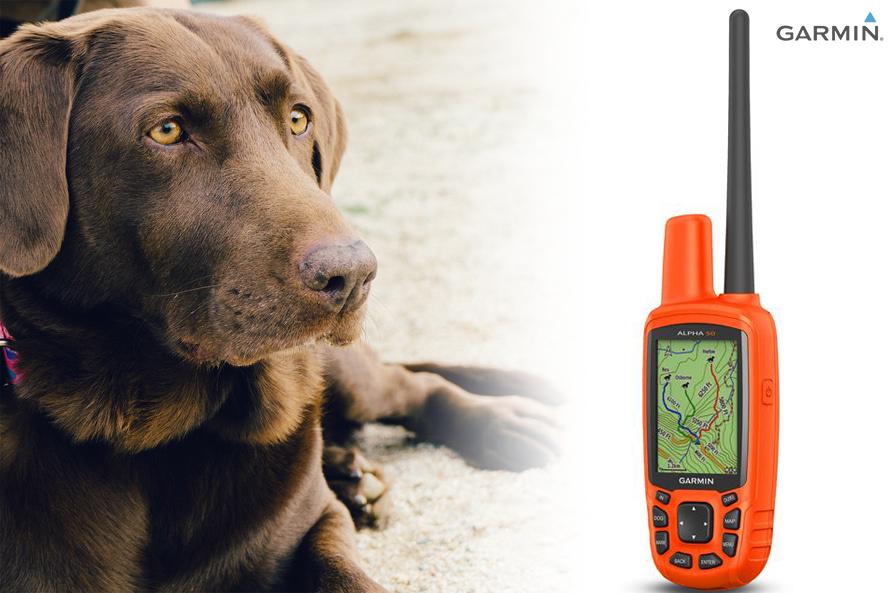 Das Garmin Hundeortungssystem Alpha 50 für Spürnasen